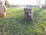 Koťata 1