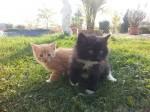 Koťata 2