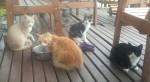 Naše kočičky