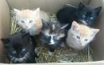Naše koťata 1